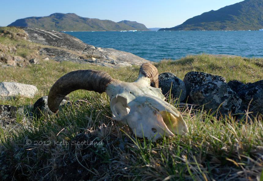 Viking Pasture, Kangerlua