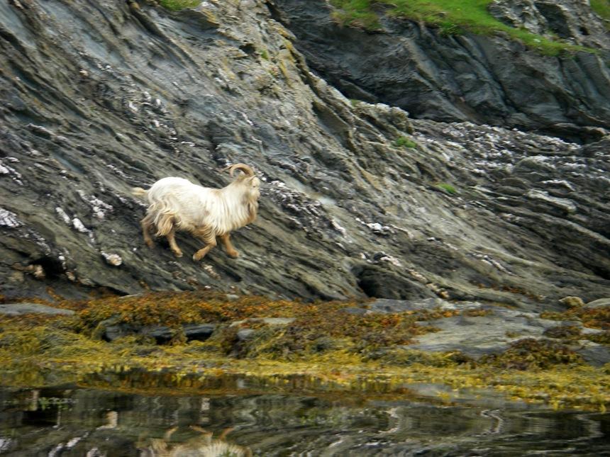 Sound of Islay