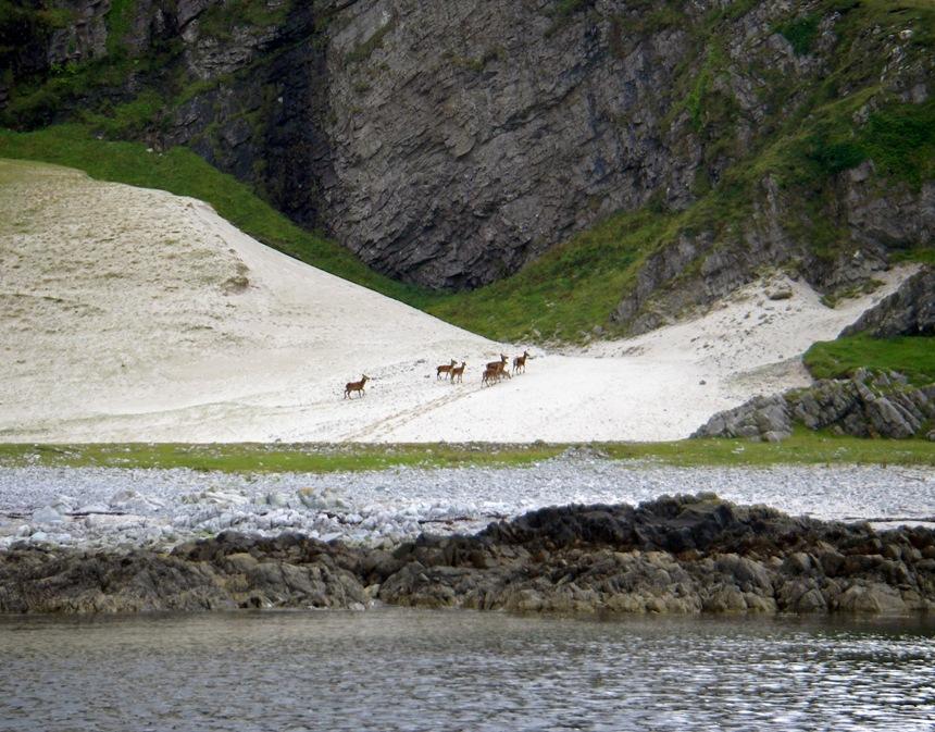 Red Deer, NW Jura